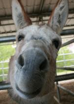 donkeyaddison