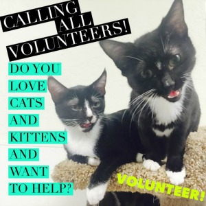 kittyvolunteer