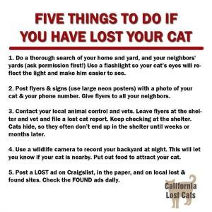 lostcats