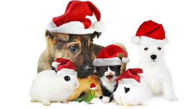 xmasanimals