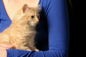 kittyhealth
