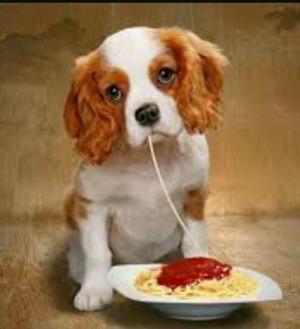 SpaghettiFeed